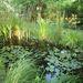 A kész tó köré ültethet különböző vízkedvelő növényeket, tehet bele vízililiomokat, halakat.