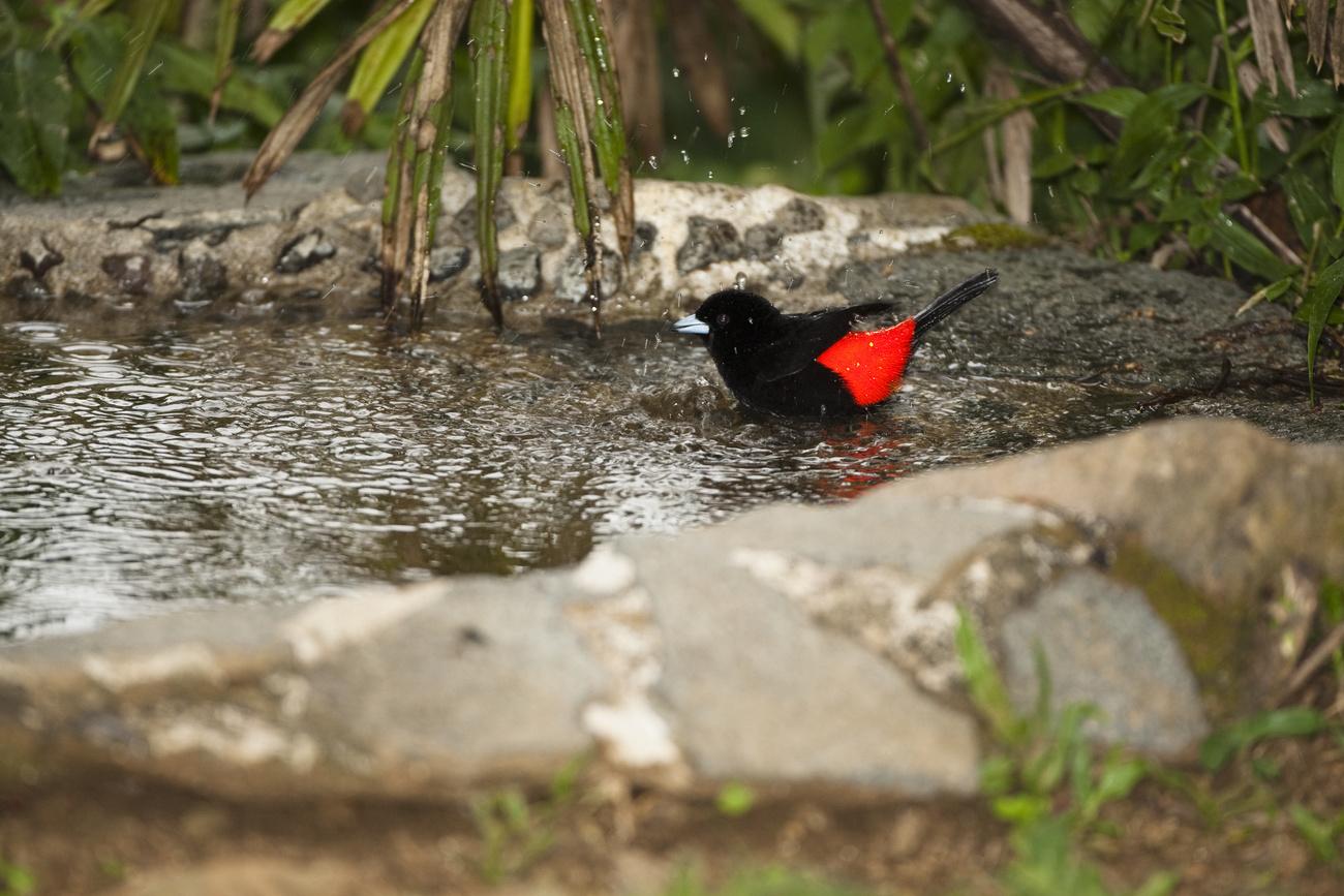 A régi mérleget egyszerűen töltse meg vízzel, akassza fel,és máris kész a madáritató!