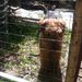 A kerítés kutya álló