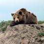 """Az állatok területét körbesétálhatjuk, és egy kisebb kilátóról vagy az újonnan telepített """"Macifelvonóról"""" nézhetjük meg őket."""