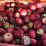 A ciderhez többféle almát is felhasználnak. Alapvetően keserű-édest é keserű-éles gyümölcsökből gyártják, de sok helyen használnak étkezési célú almákat is.