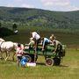 A Szépalma Hotelben lovaskocsizni is lehet