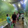 Ahogy megyünk egyre lejjebb a lépcsőkön, a Tisza vízének egyre mélyebben található élővilágát találjuk