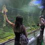 Az akvárium-rendszert lépcsőzetesen alakították ki