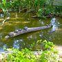 Komplett teknős kolóniákat is találunk a farönkökön