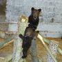 Medve- és farkasgyerekek 2012 nyarán a Medvefarmon
