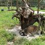 A Medveotthonban nem csak medvék élnek