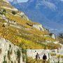 Lavaux teraszos szőlőültetvényei