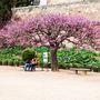 Nemcsak az épületek, de a növényvilág is lenyűgöző az Alhambrában