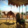 Tevékkel is találkozhatunk a dzserbai Guellala múzeumban - Tunézia