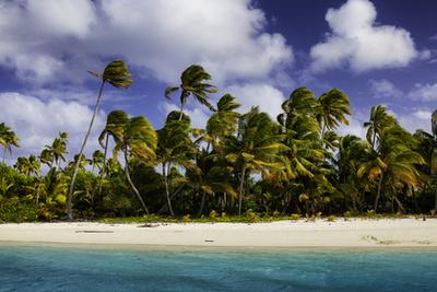 Kauai, Hawaii-szigetekKauait nem véletlenül hívják Kert-szigetnek (Garden Isle) is: területének nagy részét ugyanis esőerdő borítja, ahol a rengetegben sziklákról alázúgó vízesések bújnak meg, és a trópusi virágoknak hála mézédes illat száll. A sziget szépsége azonban nemcsak a változatos növényvilágban áll, partjai éppolyan lélegzetelállítóak, mint az erdők. Vizében teknősök és trópusi halak úsznak a korallzátonyok között.