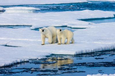 Északi-sarkAz egyik legnagyobb probléma, ami bolygónkat veszélyezteti, a klímaváltozás hatására olvadó sarkvidéki jégsapkák. Eltűnésükkel nem csak a jegesmedvék pusztulnak ki: a tengerszint emelkedése és a nagy tengeráramlások leállása visszafordíthatatlan következményekhez vezet.