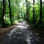 A Windberghez erdőn keresztül vezet az út.
