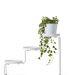 Fehér növénytartó állvány: 5990.-