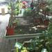 A növényeket fillérekért árulták