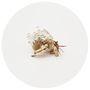 """Első hallásra talán kissé furcsa a japán Aki Inomata legújabb, """"Why Not Hand Over a 'Shelter' to Hermit Crabs"""" néven futó projectje, a művész ugyanis 3D-s nyomtatóval építi fel a különféle nemzetek építészeti sajátosságait idéző átlátszó, műanyagból készült csigaházait."""