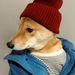 Sapkás Dog a hipster stílus kedvelőinek.