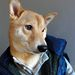 Menswear Dog lezseren, kigombolt ing és pufikabát.