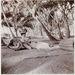 1911. tipikus  Edward-kori  ruhában pihen a pálmák alatt egy hölgy, talán Indiában, Malajziában vagy Burmában.