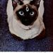 A Chanel is jó marketingfogásnak tartja a cicákat.