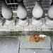 A Somerset House környékén gyülekezik a tömeg, valaki a póthaját is elhagyta a nagy várakozásban.