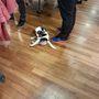 Ralph Lauren outlet: és a kutyáknak is szabad bejárása van.