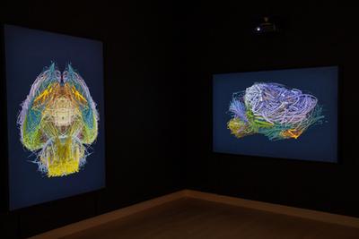 A BarabásiLab adatvizualizációi a Ludwig Múzeumban